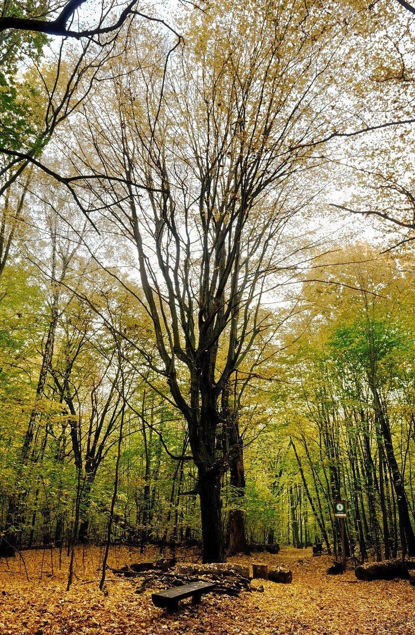 landscape, autumn, nature